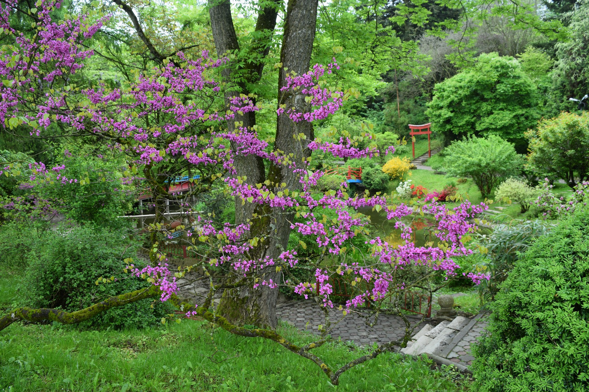 jardin botanique de cluj