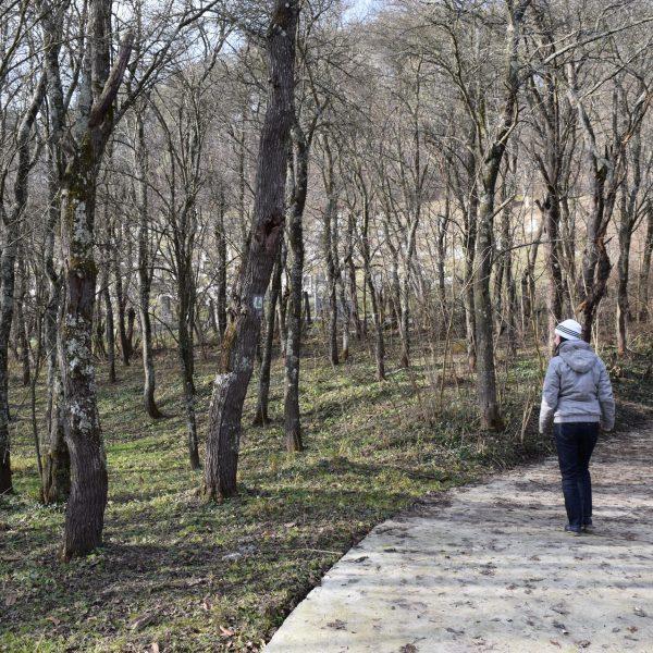 Chemin vers la citadelle de Jimbor. Brasov