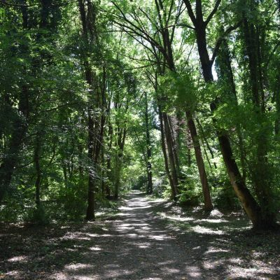 Le parc Dendrologique de Simeria.