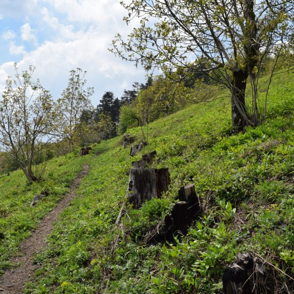 Path towards the citadel of Saschiz village.
