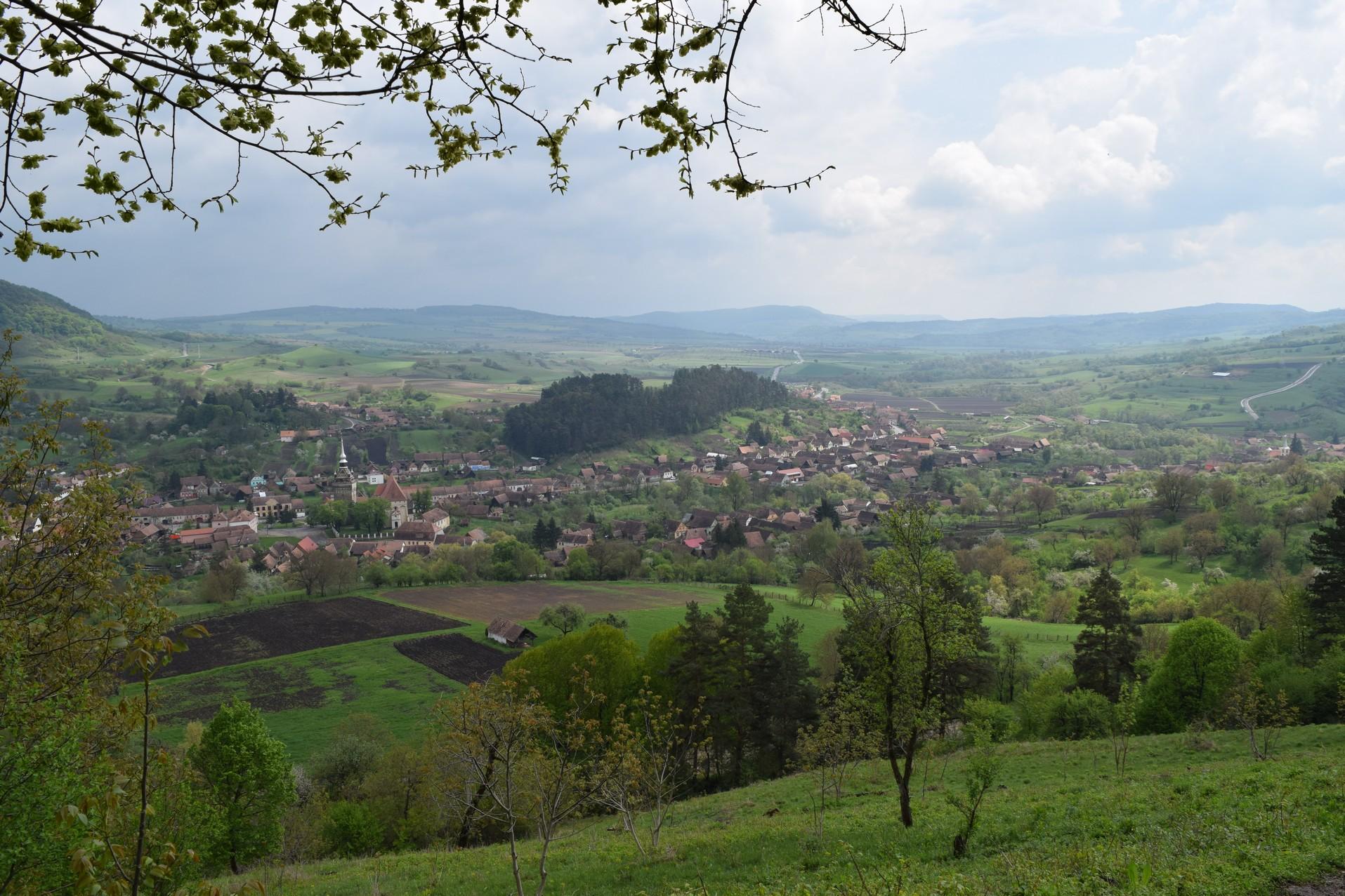 Saschiz