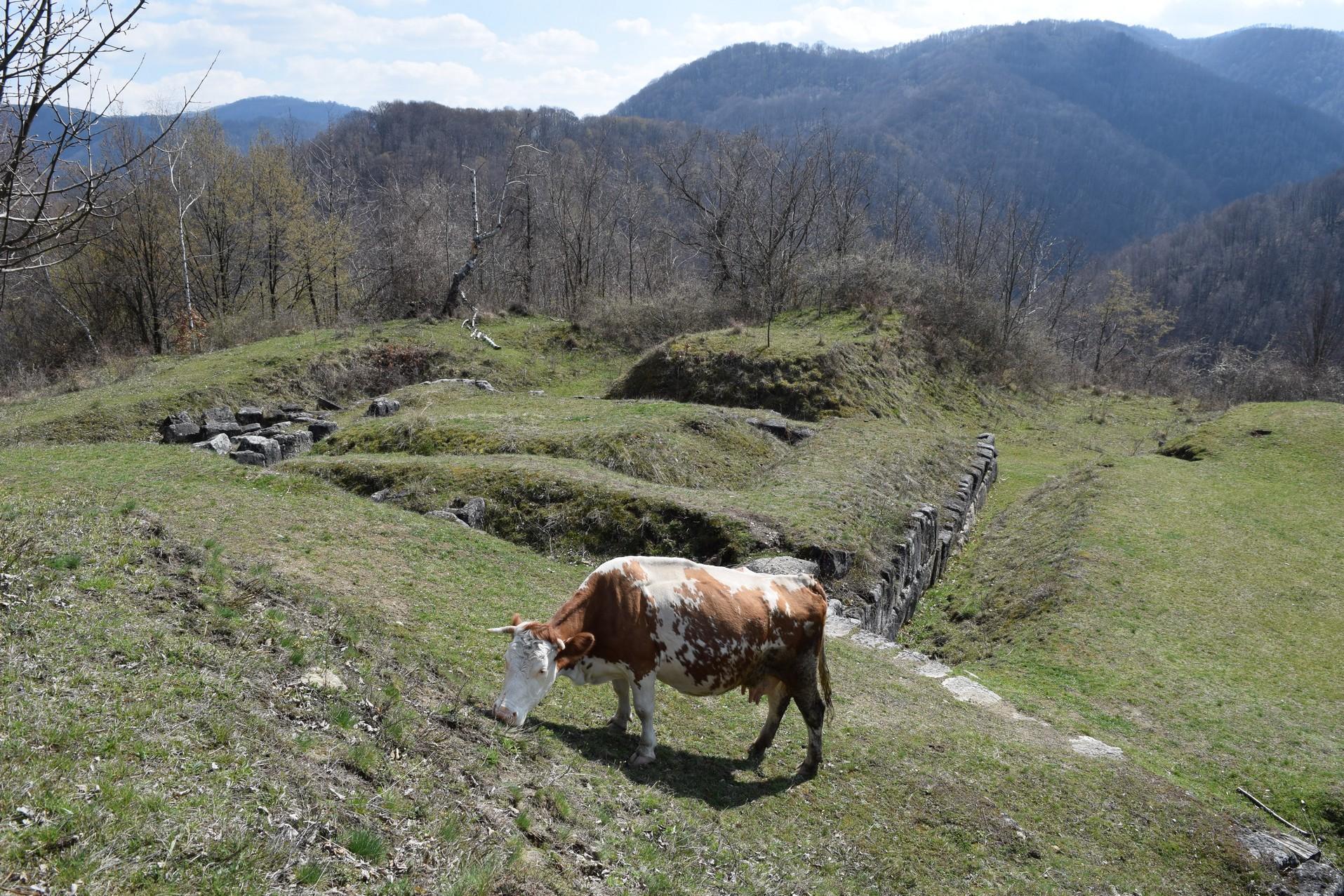 Voyage en Roumanie Cite Dace Cetatuie