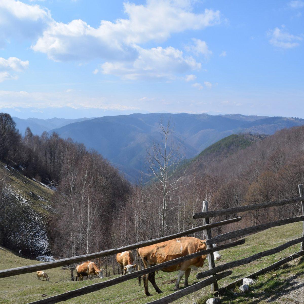 Voyage en Roumanie : Costesti