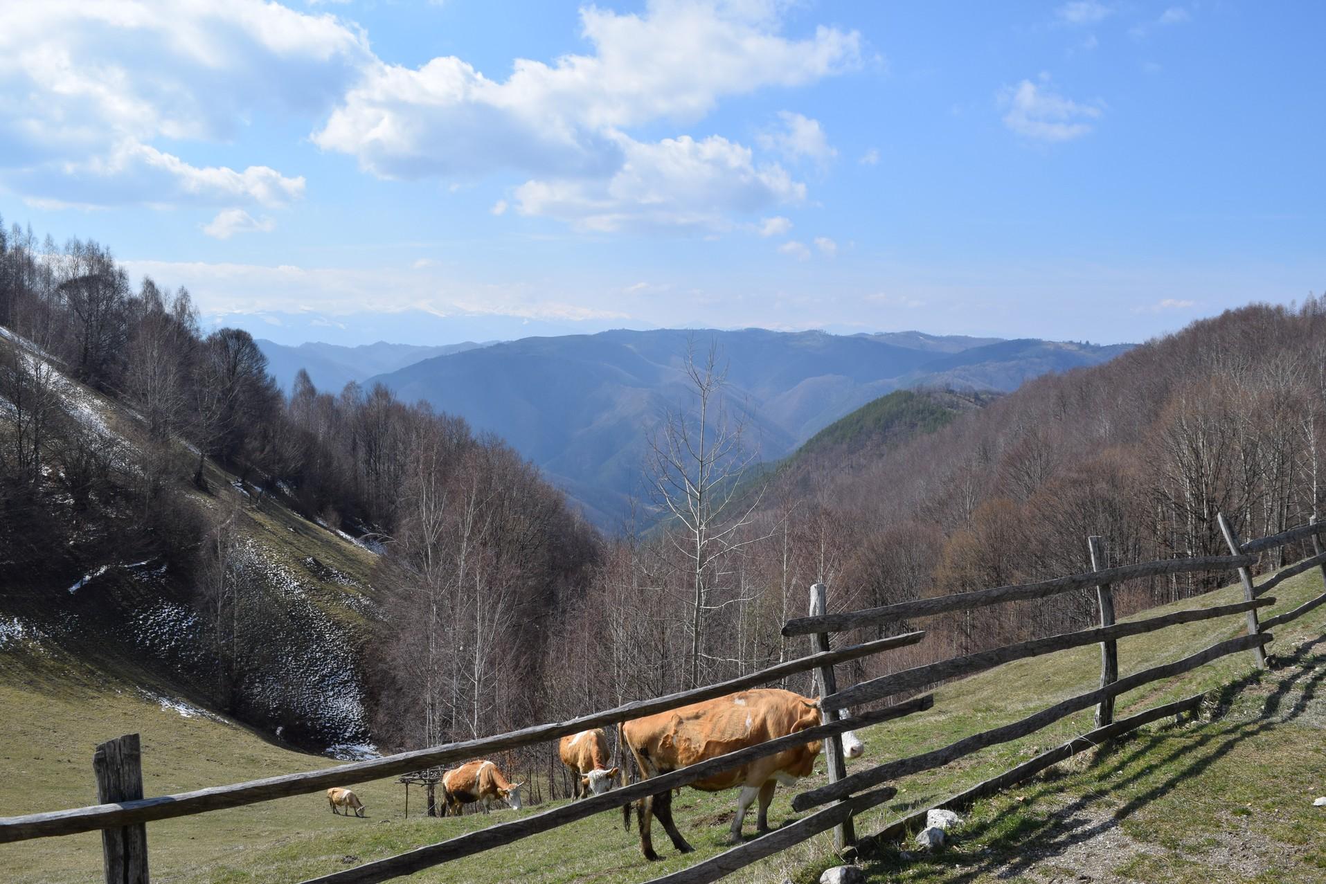 Voyage en Roumanie Costesti