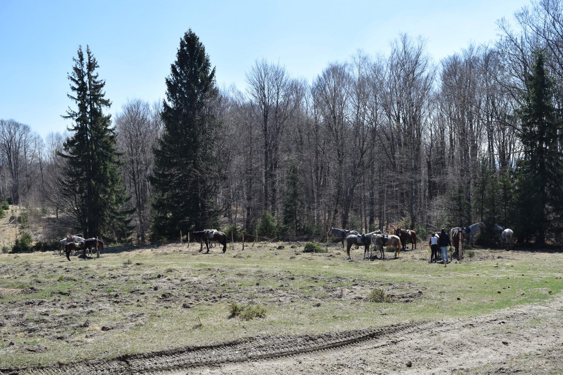randonnee equestre